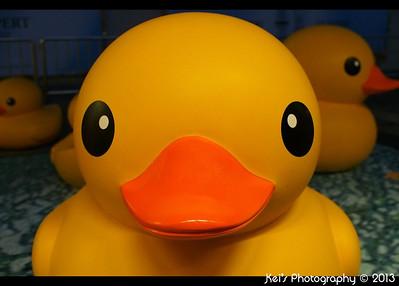 20130504 - Rubber Duck