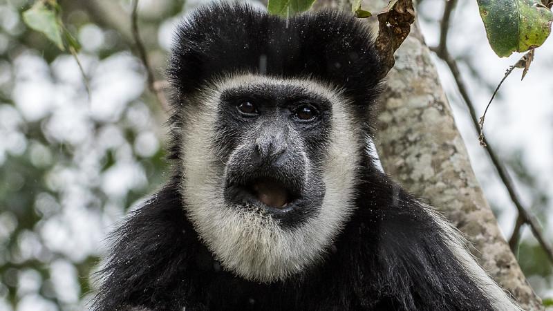 Kenya-0206.jpg