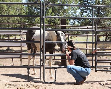 Anna Twinney Foal Gentling