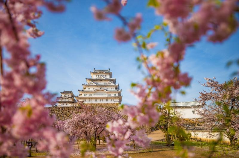 himeji-castle-shallow-dof-sigma-20mm-lens-cherry-blossom.jpg