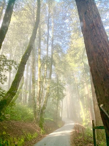 Misty Morning drive to La Honda