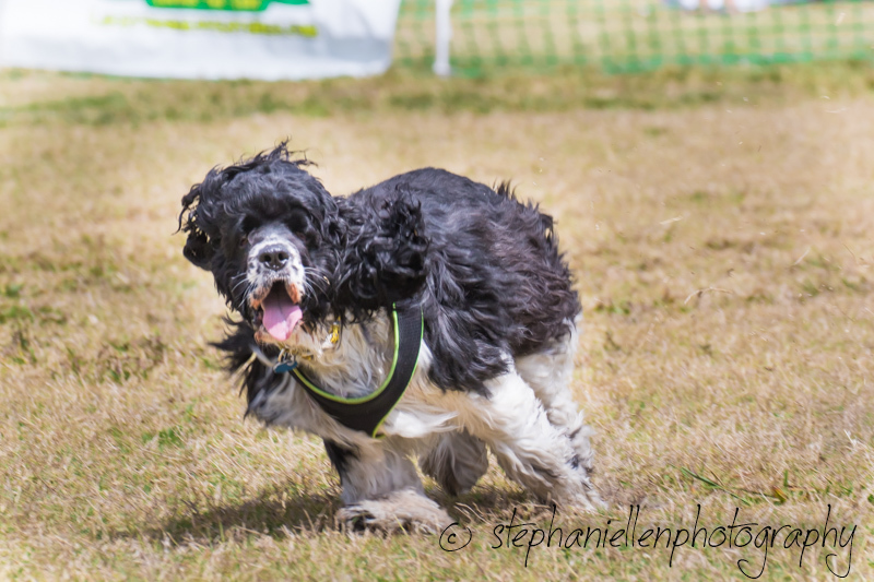 Woofstock_carrollwood_tampa_2018_stephaniellen_photography_MG_8543.jpg