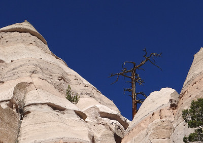 Rocks & Trees 1