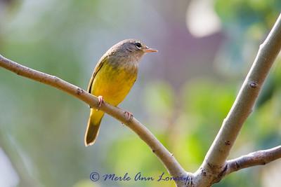 Bird ID help needed