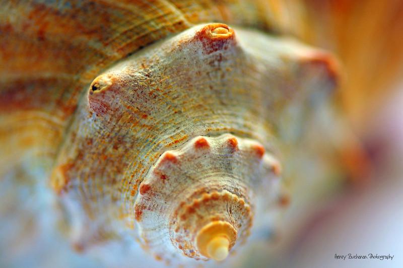 Close up look- HHI
