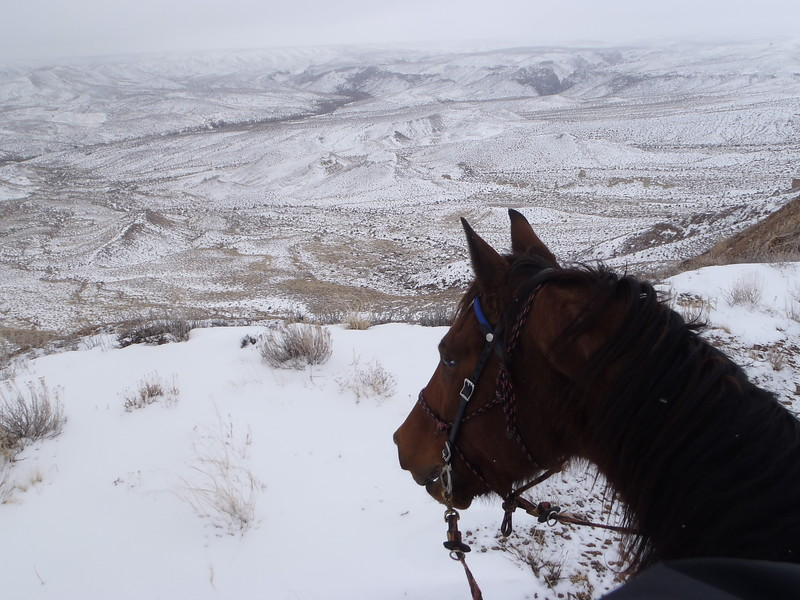 Riding Hillbillie Willie in Owyhee, overlooking Hart Crick, Idaho