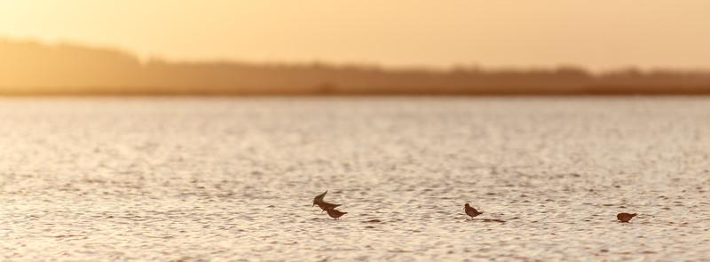 Pájaros en la Laguna de José Ignacio