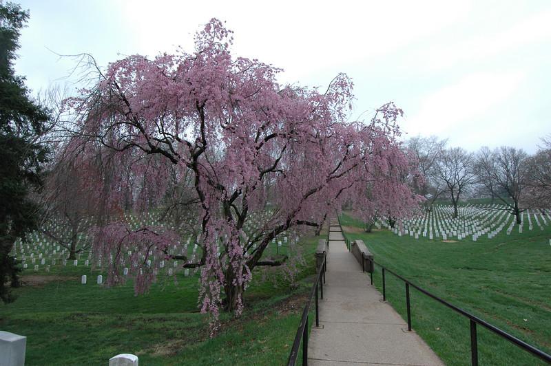 050407 2783 USA - Washington DC - Arlington Cemetery _D _E _N ~E ~L.JPG