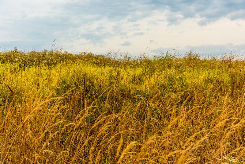 Prairie  35