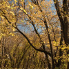 Golden and orange canopy