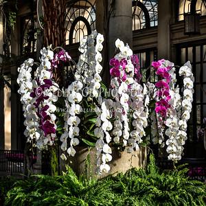 Longwood Flower Gardens Orchids - 06 Feb 2016