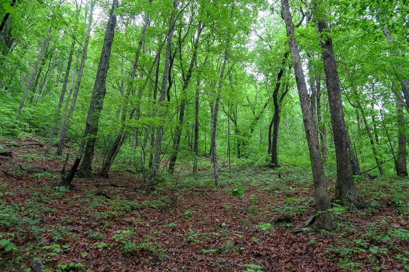 Lower Sidehill Trail -- 2,600'