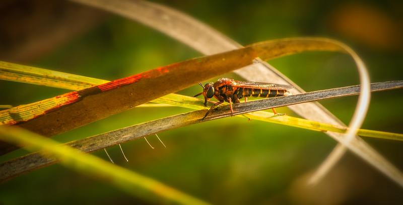 Bugs and Beetles - 132.jpg