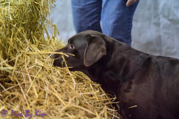 Eastern Iowa Barn Hunt