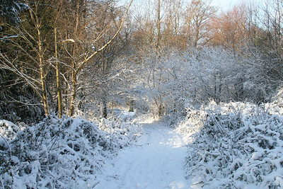 Box Hill in the Snow
