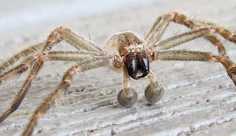 Spider on porch close2.jpg