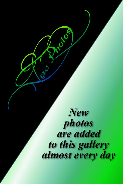 New Photos