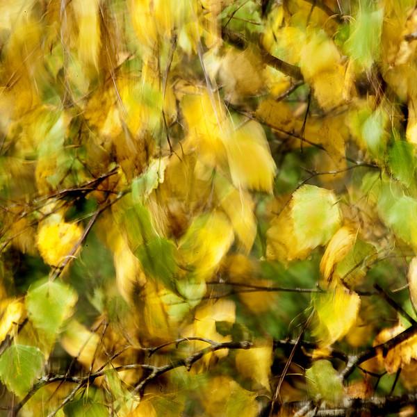 2011-okt-05_2270a.jpg