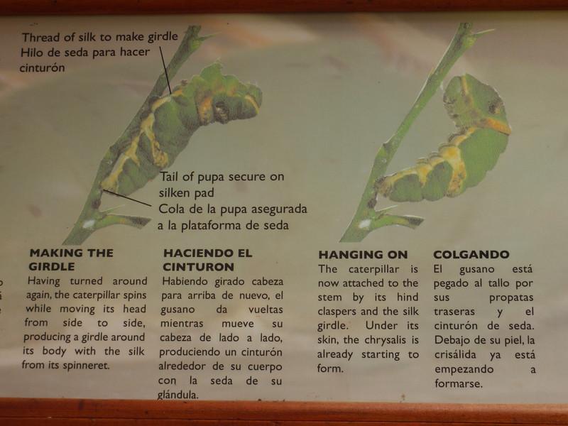 028_La Paz Waterfall Gardens. Butterflies.JPG