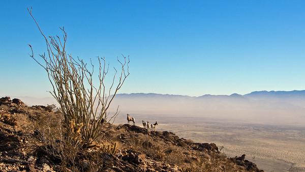 Coyote Mountain - Anza Borrego SP  12.31.13