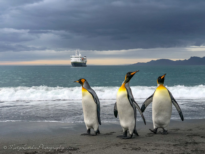 Antarctic-155