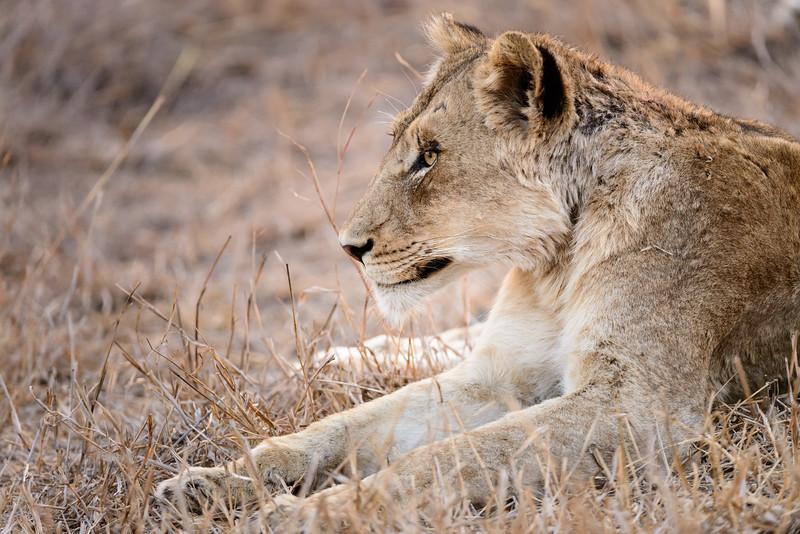LeopardHills-20150826-4116.jpg