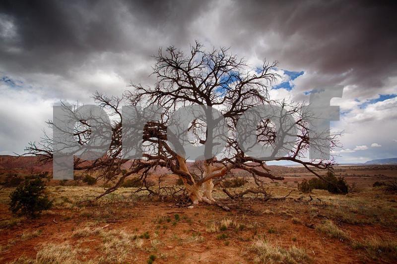 Tree, Ghost Ranch 6964.jpg