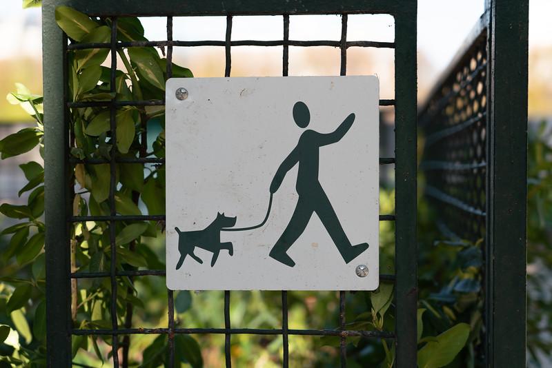 Dogs-132.jpg