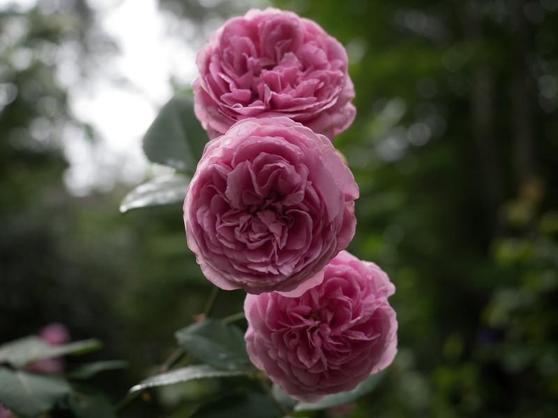 garden_may06-5060004 copy.jpg