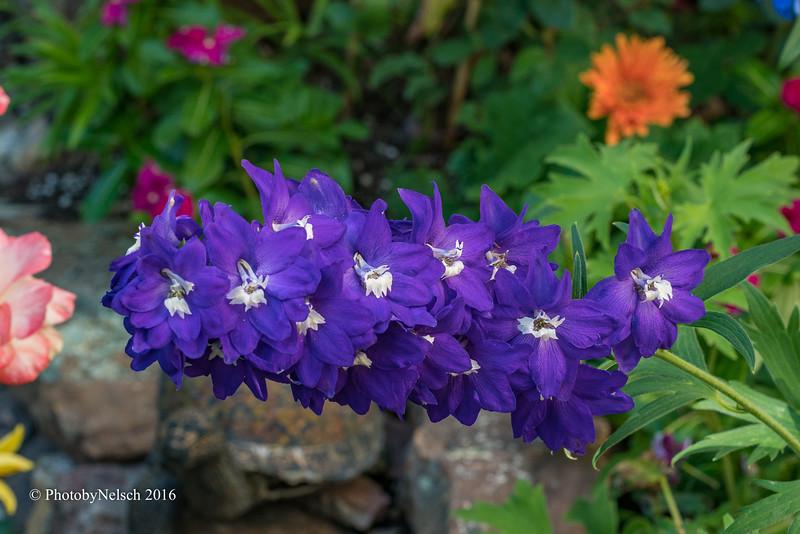 Don Egan's Flowers -128.jpg
