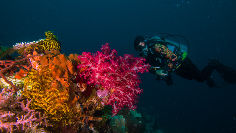 Taken at Telaga Nita divesite in Ternate Island, North Maluku, Indonesia during our 8D7N excursion in March 2018