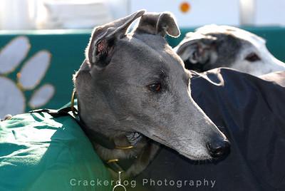 2006 West Coast Greyhound Gathering, Solvang, CA