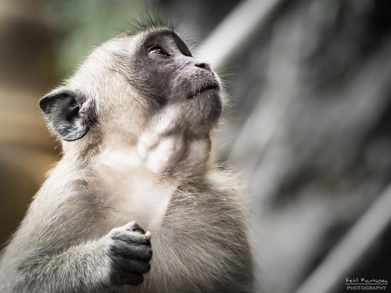 2017-12-22 Monkeys-1.jpg