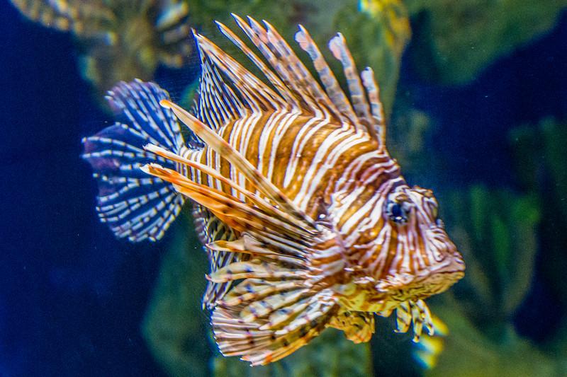 GA Aquarium with Linc, Ali & Abe-22.jpg