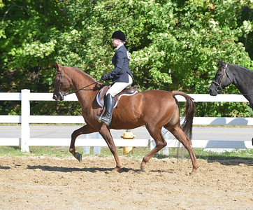 Events 3 and 4  -  All Breed Hunter Pleasure  19 Over &  18 Under