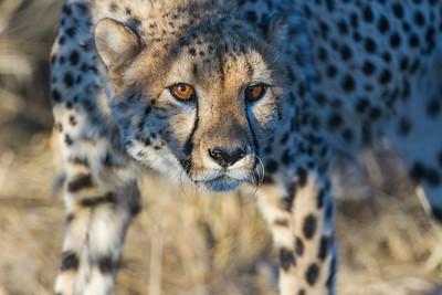 Namibia Mammals 1