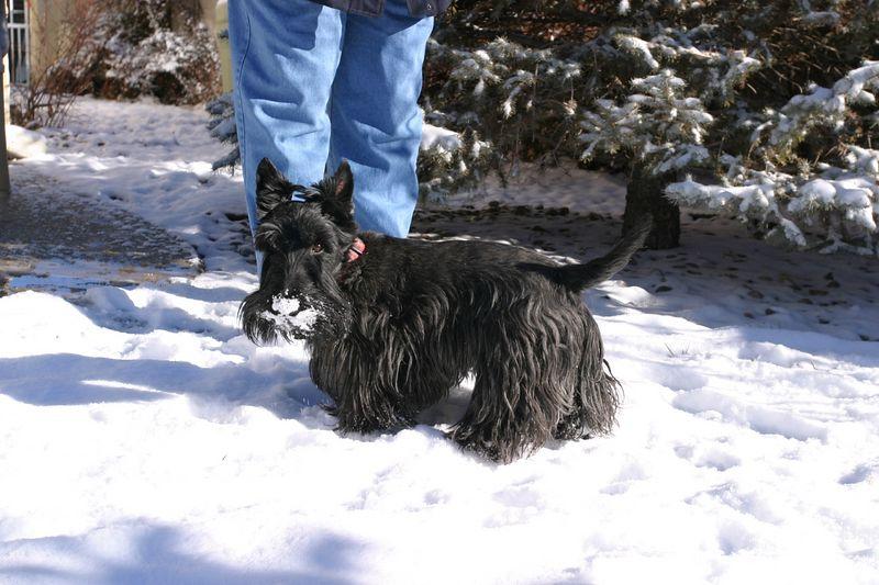 Mr Mac testing the snow, Feb 2004