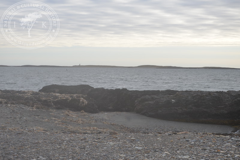 The autonomous camera system has taken four hourly pictures around the clock, from May 9th to July 16th in 2019.