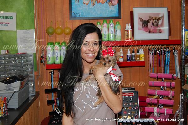 0 Sold to Angela Tucker Morkie Puppy # 2291 ( Updated Photo & Video )