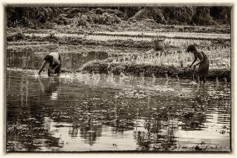 Rural life scene at Kho Tha Village.