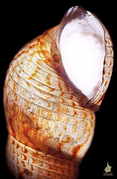 A seashell under microscope.