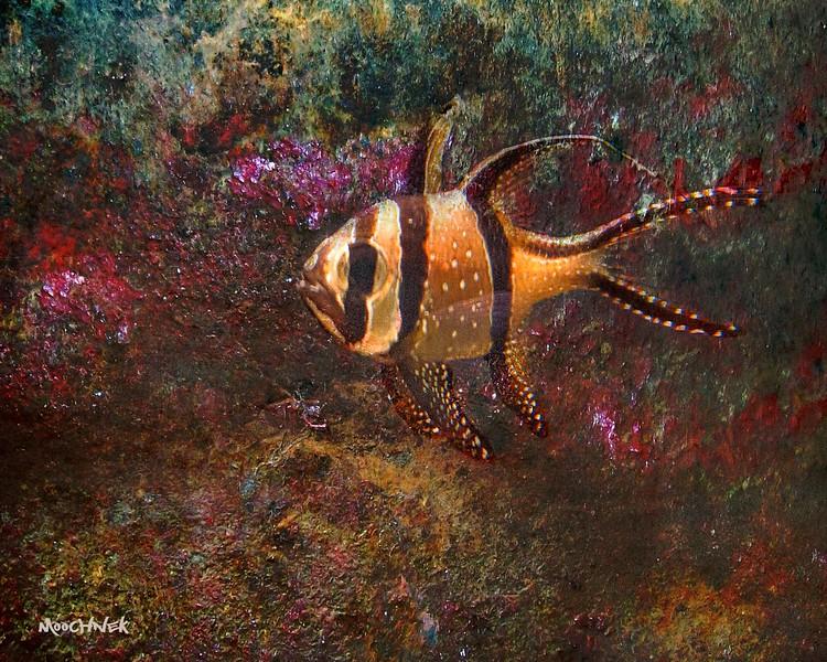 fish1100.jpg