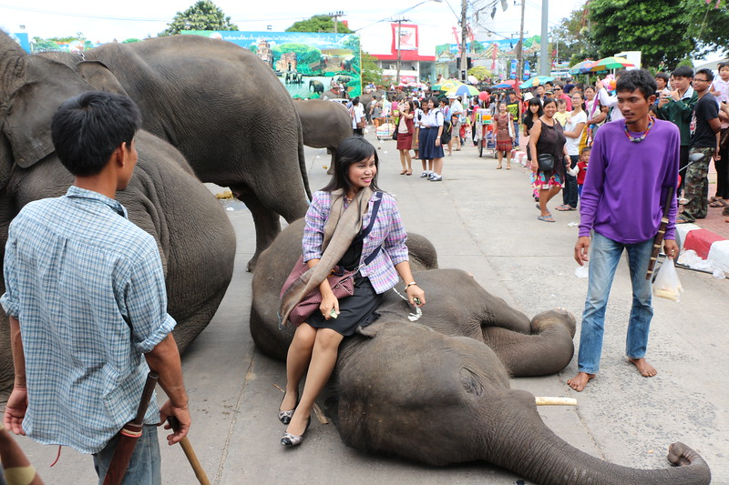 2014-11-14 Surin Elephant Welcome Feast 672.JPG