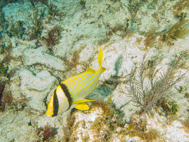 Tulum Trip - Diving 20130405-17-45 _405262904.jpg