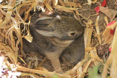 La Cresta, Murrieta, CA: Mammals