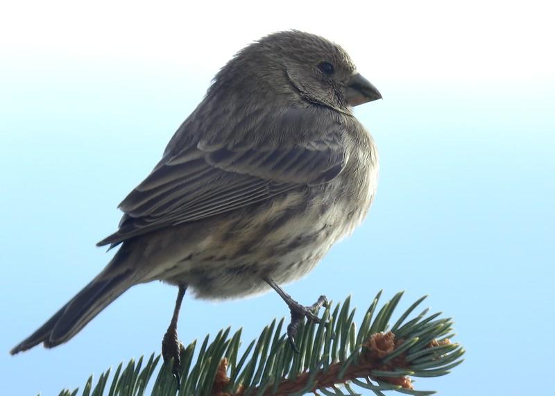 birds (141).JPG