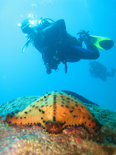 Diving in the Galapagos (362 of 392)
