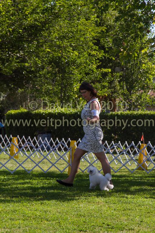 Jun 19 Toy Poodle