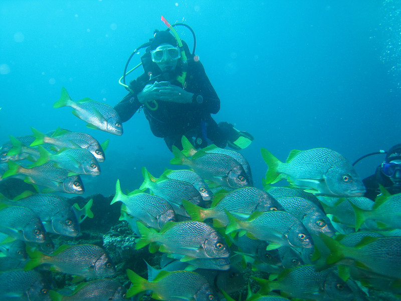 Diving in the Galapagos (70 of 392)