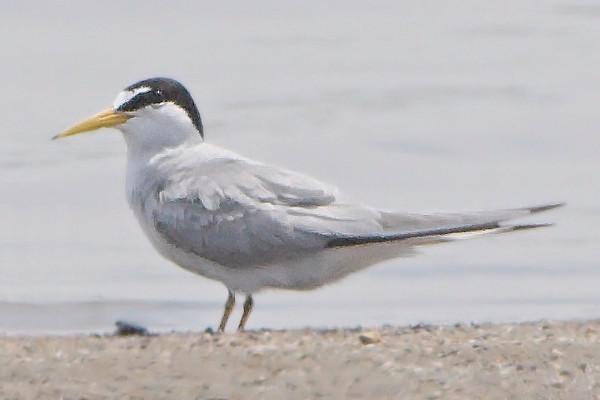 2009-06-22 Riverlands Migratory Bird Sanctuary